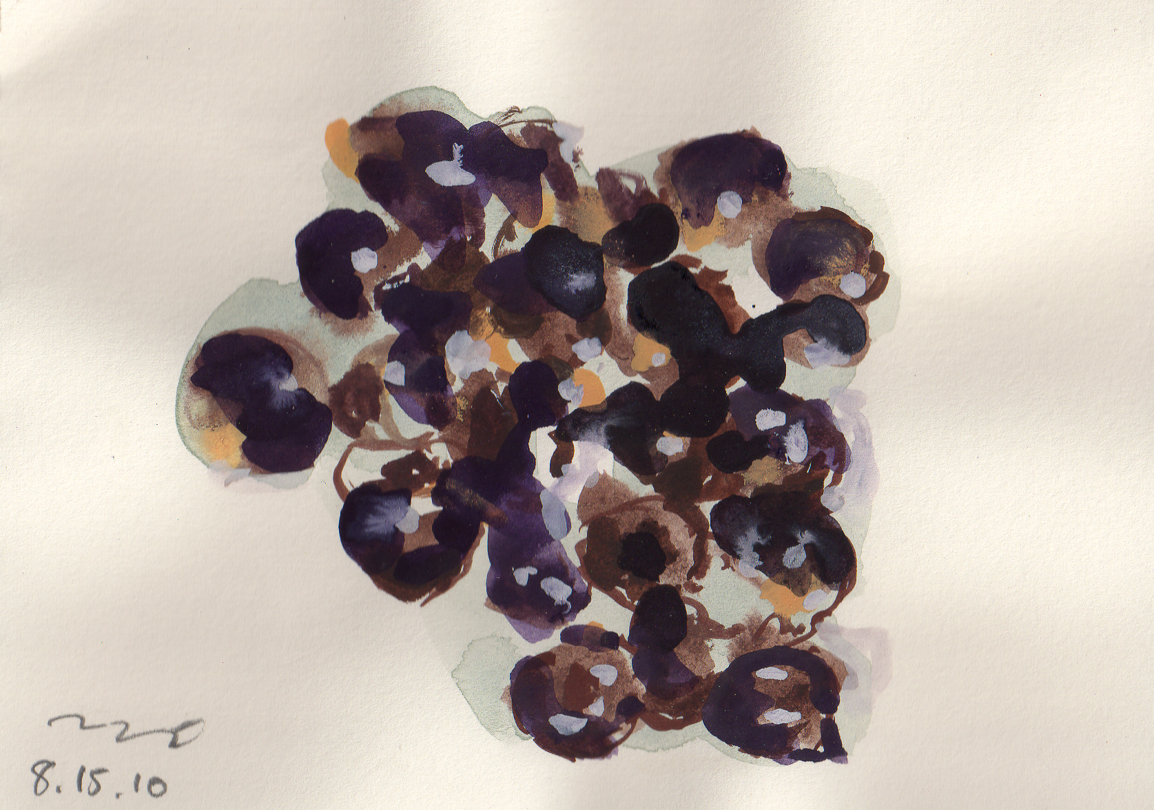 Water color painting of Akee seeds by Nils Benson